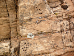 Cross-bedded sandstone (Glen Canyon Sandstone, Upper Triassic to Lower Jurassic; Dinosaur National Monument, Utah, USA) 15 (James St. John) Tags: glen canyon sandstone dinosaur national monument utah navajo nugget quartzose sandstones triassic jurassic cross bedding beds bedded crossbedding crossbedded crossbeds