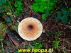 """2019-10-09   Amersfoortse         Natuurtocht         25 Km   (55) • <a style=""""font-size:0.8em;"""" href=""""http://www.flickr.com/photos/118469228@N03/48872664047/"""" target=""""_blank"""">View on Flickr</a>"""
