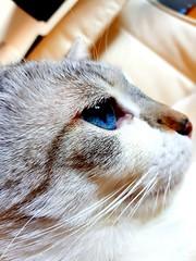 A cat eyes.  #gatti #cats #cat #gatto #catsofinstagram #catstagram #instacat #love #catlover #pet #kitten #animals #pets #meow #gattini #ilovemycat #animal #kittens #instagood #cats_of_instagram #catoftheday #italy #kitty #gattidiinstagram #gatos #catlove (versusgaiming) Tags: love pets photooftheday catlover gattini catsofinstagram gatto kittens instacat kitty kitten gatti cat animals catsagram pet italy instagood catstagram gattidiinstagram gatos cats meow catlovers petstagram catoftheday animal miao ilovemycat