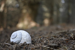 An Ethereal Remnant (Robin Shepperson) Tags: snail shell death bokeh forest nature white ghost ghostly dead floor ground wildlife d3400 nikon germany shierke deutschland woods woodland 1855mm kitlens outside yellow orange trees old