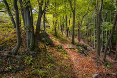 Road into the Woods (BenedekM) Tags: nikon nikond3200 d3200 sigma sigma1750f28 road hiking forest woods tree trees hungarianforest hungarian hungary lights shadow travel bush moss rocks mountains peace landscape view colors autumn autumncolours 2019 october
