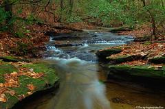 RavenRock+1_0838_TCW (nickp_63) Tags: stream raven rock state park north carolina lillington cascade creek forest moss leaves long exposure nature