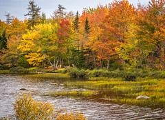 Around the corner... (Nancy Rose) Tags: trees maple colorful lake marsh grass water deciduous novascotia tourism autumn fall