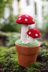 276/365 potted mushrooms