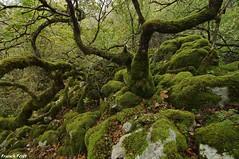 arbres dans le lapiaz du Val St Marie - Lizine (francky25) Tags: arbres dans le lapiaz du val st marie lizine karst franchecomté doubs automne