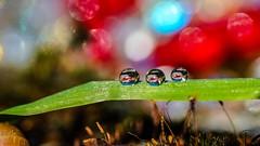 Drops - 7529 (✵ΨᗩSᗰIᘉᗴ HᗴᘉS✵89 000 000 THXS) Tags: drop drops droplet water macro bokeh sony sonyilce7 belgium europa aaa namuroise look photo friends be yasminehens interest eu fr party greatphotographers lanamuroise flickering