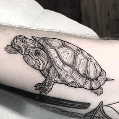 Two headed turtle. 🐢 . .. ... . .. ... . .. #eyeofjadetattoo #eyeofjade #jeremygolden #jeremy_golden #jeremygoldentattoo #blackwork #blackworkerssubmission #darkartists #blacktattoomag #blacktattooart #btattooing #onlyblackart #blacktattoo #blackin