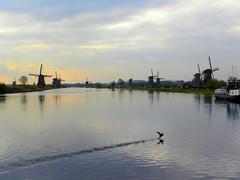 DSCN0783 (alainazer) Tags: kinderdijk nederland paysbas holland hollande eau acqua water windmill moulin mulino mühlen moinhos