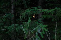 And the dark woods grew darker still.. (b-nik) Tags: fuijifilm x100f light evening sun forest wood woods trees dark spooky secret dof fujifilm dusk landscape