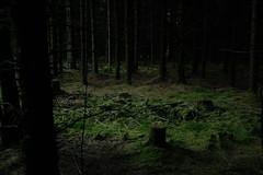 And the dark woods grew darker still.. (b-nik) Tags: fujifilm x100f evening dusk light dark wood woods forest spooky trees landscape