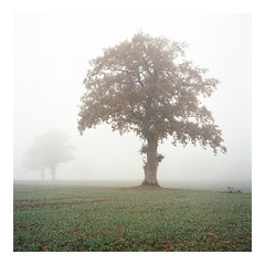 Still Waiting - Kodak Ektar 100 (magnus.joensson) Tags: sweden swedish skåne autumn fog road haze october rolleiflex carl zeiss tessar 75mm kodak ektar 100 exp 6x6 medium format c41