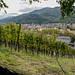 Freiburg viniculture