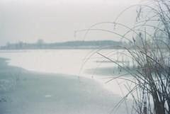 (Moesko Photography) Tags: analogue smena8m lake park snow winter outdoor bush munich münchen riem bavaria germany