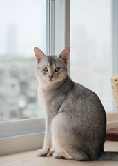 20190624_04_LR (enno7898) Tags: panasonic lumix lumixg9 dcg9 xvario vario 35100mm f28 cat pet animal abyssinian
