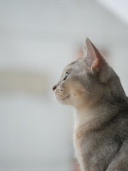 20190624_01_LR (enno7898) Tags: panasonic lumix lumixg9 dcg9 xvario vario 35100mm f28 cat pet animal abyssinian