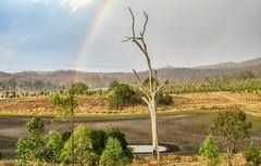 Bundamba Lagoon catchment Recreation Area, Ripley 4306, Ipswich Queensland, Australia, during current drought times. (Lance CASTLE) Tags: rainbow drought mudflats weather needrain australiashowcase deadtree explore rural ipswichqueensland bundambalagoon stewartdale