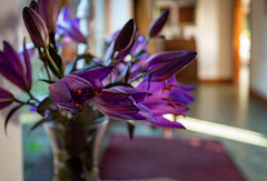 Q Purple Lillies (jayneboo) Tags: flowers light home lily purple hallway gift stamen vase lillies