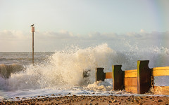 Splash (Mandy Willard) Tags: beach bexhill sea pebbles groynes marker cormorant wave spray 2lilowls texture lightleak colourandlight10
