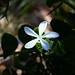 L'étoile à 5 branches