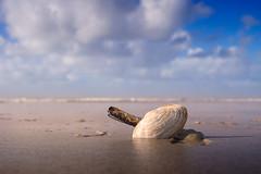 the shells (beginner17) Tags: muschel shell meer nordsee sand strand wasser wellen himmel wolken amrum nordfriesland batis zeiss 25mm sony alpha alpha7ii