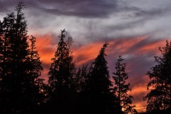 The sky is on fire (Abhay Parvate) Tags: goldenhour trees sunset nature red colorful silhouette