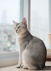 20190624_05_LR (enno7898) Tags: panasonic lumix lumixg9 dcg9 xvario vario 35100mm f28 cat pet animal abyssinian