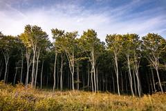 (zedspics) Tags: zalaszántó magyarország hungary zedspics 1910 forest nature autumn fall trees