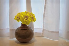 Summer on the sill.... (Joe Hengel) Tags: summeronthesill flower de delaware sussexcounty yellowflower flowers vase windowsill curtains ledge summer summertime daffodils daffodil texture