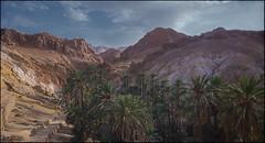 Oasis de Chebika. (antoniocamero21) Tags: paisaje amanecer color foto sony montañas cielo palmeras desierto oasis chebika túnez