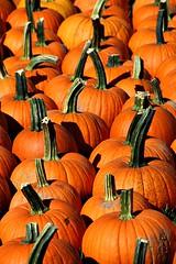 PUMPKINS (MIKECNY) Tags: pumpkin gourd fall orange ellmsfamilyfarm