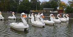 Swans (ahisgett) Tags: birmingham canon hill park cannon