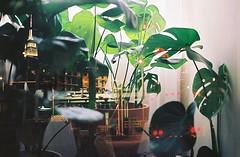 Concrete Jungle (Sarah Rausch) Tags: filmswap kodak kodakektar100 empirestatebuilding analog monsteradeliciosa newyorkcity minoltaxe5 minolta grain film bokeh burst concretejungle doubleexposure doubleexposureonfilm