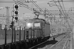 milano area settembre 2019 #56 (train_spotting) Tags: milanorogoredo lenord ferrovienordmilano nordcargo dbcargoitaliasrl vectrondc vectron e1910203inc siemens nikond7100
