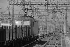 milano area settembre 2019 #57 (train_spotting) Tags: milanorogoredo lenord ferrovienordmilano nordcargo dbcargoitaliasrl vectrondc vectron e1910203inc siemens nikond7100