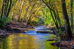 Autumn light (FVillalpando) Tags: autumn light colours trees river water reflection ngysa