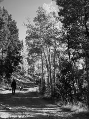 yes, she's coming (johngpt) Tags: santafenationalforest santafe aspenvistapicnicgroundandtrail tree fujifilmx100f dog aspen trees person places newmexico thursdaymonochrome donnerstagsmonochrom tpfsilhouettes