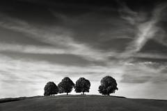 Vier Linden (StefanB) Tags: deutschland 2019 em5 1235mm tree germany treescape ries schwaben bäume baum