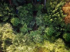 Garden by drone (@strojani on Instagram) Tags: dji spark drone firence firenze florence