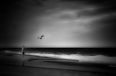 Summer memory... (mia depaola) Tags: yongnuo50mm eos canon outdoors candid atmospheric minimalist blackandwhite vintagefeel beach seascape seabird silhouette evocative dreamy