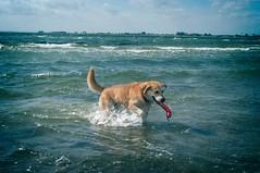 Hund hat Spaß am Fehmarnsund | 9. September 2011 | Fehmarn - Schleswig-Holstein - Germany