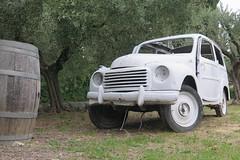 Voiture vintage dans l'oliveraie (Sokleine) Tags: vintage automobile voiture car macchina tonneau barrel vineyard vérone italia vénétie veneto italy italie europe eu