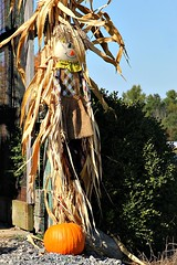 FALL DECORATIONS (MIKECNY) Tags: pumpkin fall scarecrow cornstalk decoration ellmsfamilyfarm display