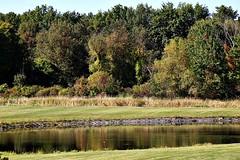 FARM POND (MIKECNY) Tags: water pond landscape fall ellmsfamilyfarm trees wooded