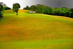 Fenaison (JDAMI) Tags: fenaison foin talus maisonnette cabane ciel orage gris vert verdure pré prairie pâturages rural ruralité ainhoa paysbasque 64 pyrennéesatlantiques aquitaine nouvelleaquitaine france nikon d600 tamron 2470 arbres