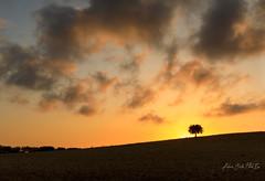 Oltre la collina (Antonio Ciriello PhotoEos) Tags: crispiano campagna countryside albero tree nature natura sunset tramonto sole sun clouds nuvole hill collina canon 5dmarkiv 5d eos5dmarkiv canon5dmarkiv canon5d canoneos5dmarkiv 2470 canon2470 2470f4 taranto puglia italia italy apulia
