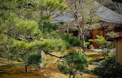 Dans les jardins du Rokuon-ji Temple (claudiemenoud) Tags: japon japan jardin garden paysage nature nikon b700 coolpix arbre printemps pixelistes