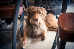 Rencontre avec Cookie. (LACPIXEL) Tags: chien dog perro pet animal mascota cookie lacabane poissy sony flickr lacpixel