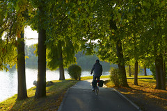 Bike Rider (αpix) Tags: bike rider light sunset parc park trees water lake bucharest bucuresti romania sonyalpha7 sigmaart50mm path alee
