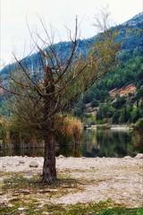 * (PattyK.) Tags: ioannina giannena giannina epirus ipiros balkans hellas ellada greece grecia griechenland lake pamvotida lakepamvotida ioanninalake lakeside lakefront waterfront bythelake water ιωάννινα γιάννενα ελλάδα βαλκάνια λίμνη παμβώτιδα λίμνηπαμβώτιδα λίμνηιωαννίνων νερό φύση οκτώβριοσ october 2019 snapseed nikond3100 nature