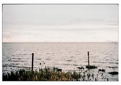 (schlomo jawotnik) Tags: 2019 juli greetsiel ostfriesland küste nordsee wasser ufer gras pfähle vögel schlomostierwelt horizont industrieanlage analog film kodak kodakproimage100 usw